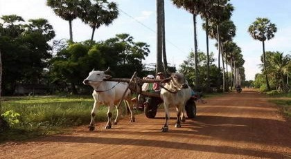 Cambodia Land Travel by Car
